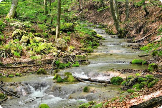ruisseau-photo